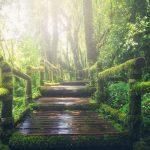 natura provenza meditazione